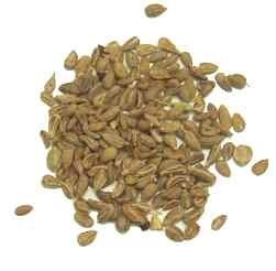 Anise Seeds | Salem Botanicals