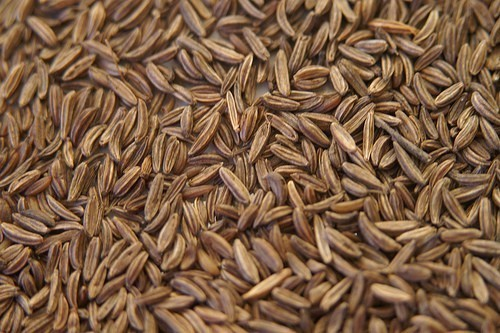 Caraway Seeds Bulk Dry Herb