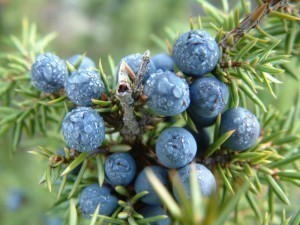 Juniper Berry Bulk Dry Herb