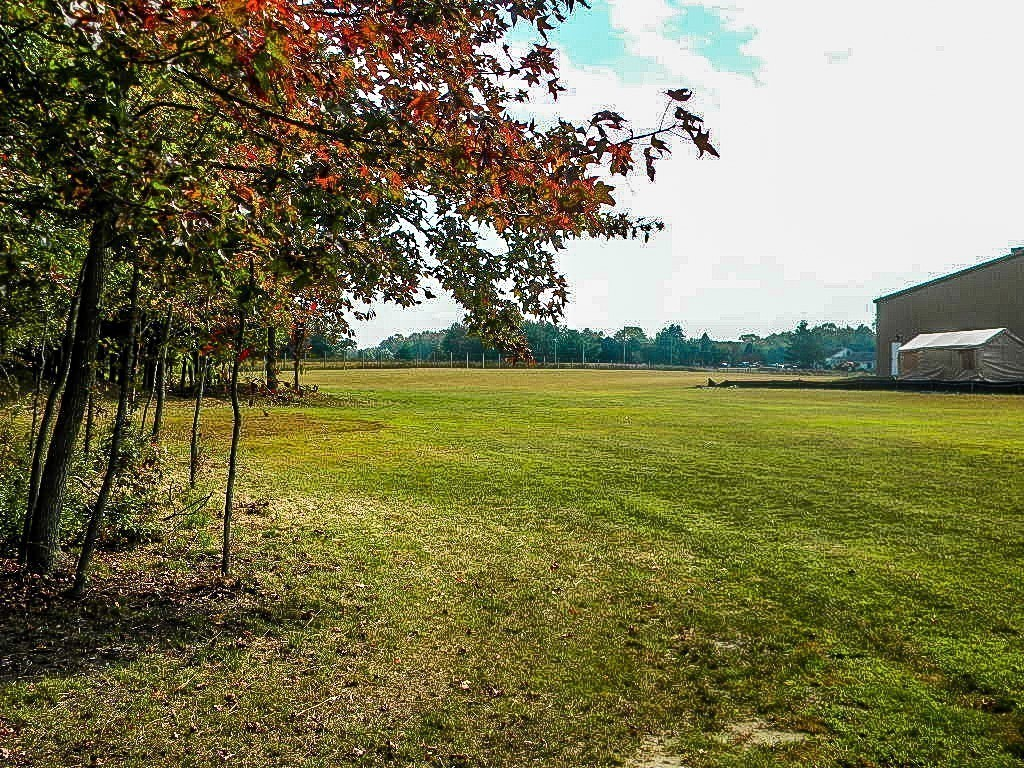 Scene of a field with trees starting to turn red