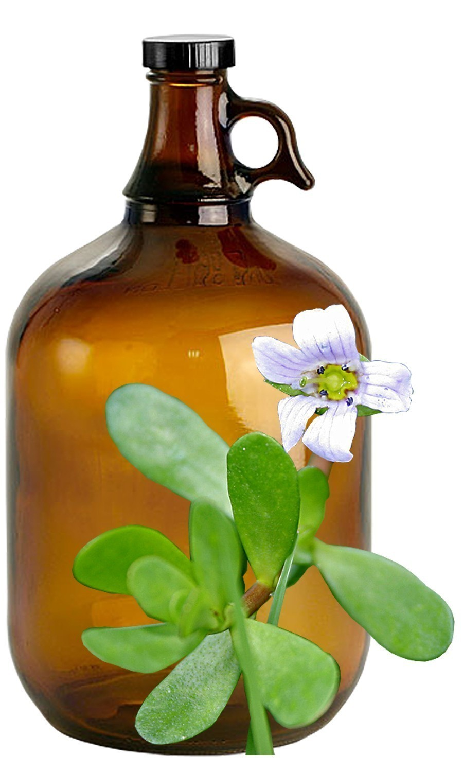 Bacopa Bulk Liquid Extracts