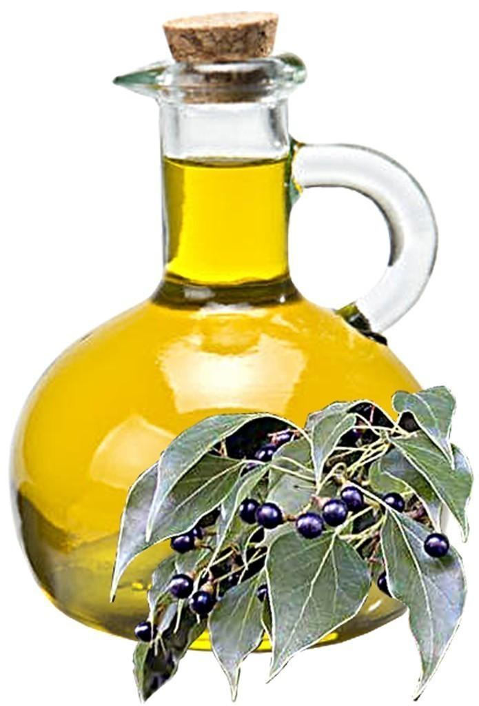 Camphor Oil Bulk Oil