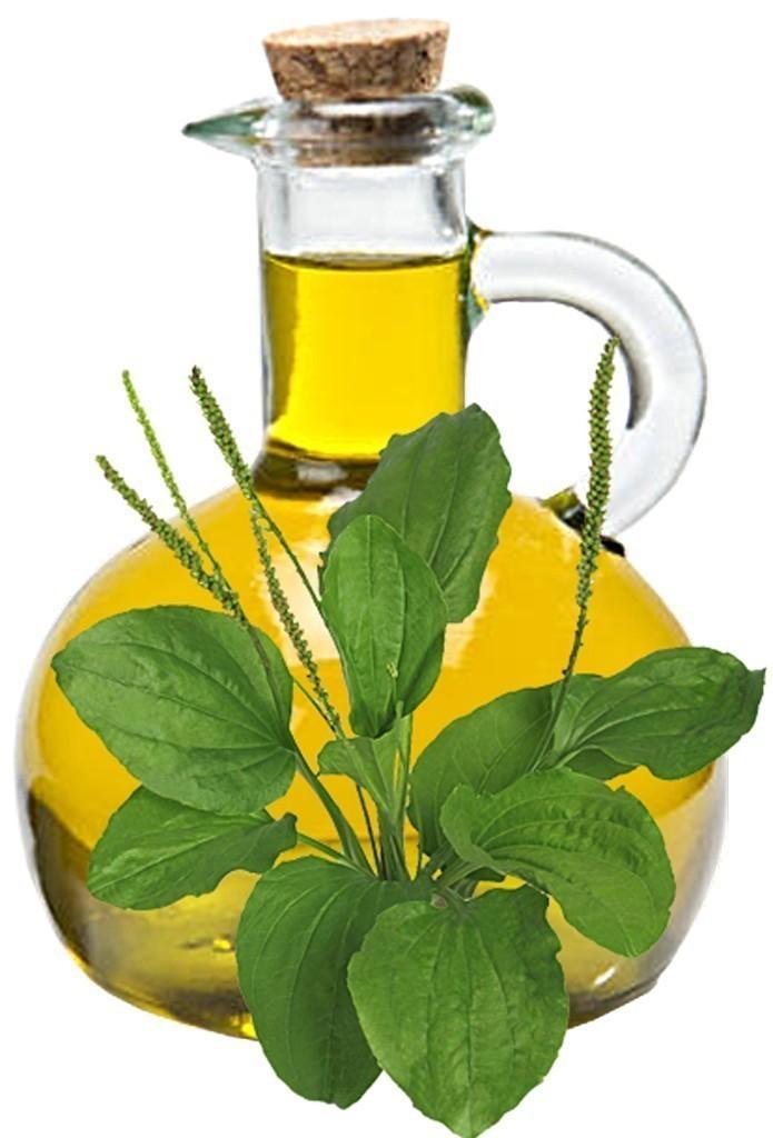 Plantain Oil Bulk Oil