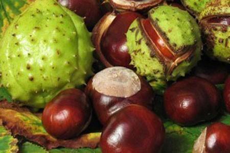 Horse Chestnut Bulk Dry Herb