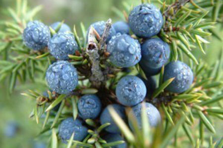 Juniper Berry Bulk Dry Herb